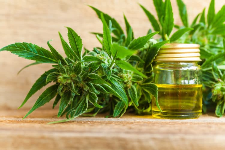 How hemp seed oil can help to temper your arthritis