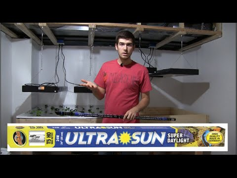 What Grow Lights I use & LED vs. CFL for dummies