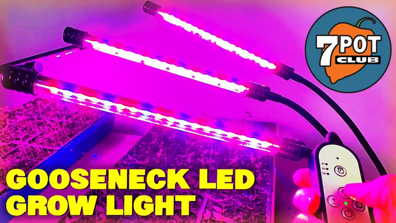 Gooseneck LED Grow Lights for Indoor Hot Pepper Seedlings