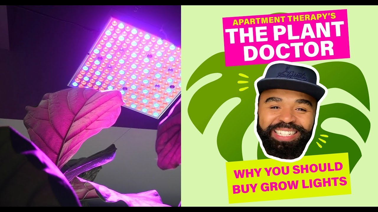 Why You Should Buy Grow Lights | The Plant Doctor