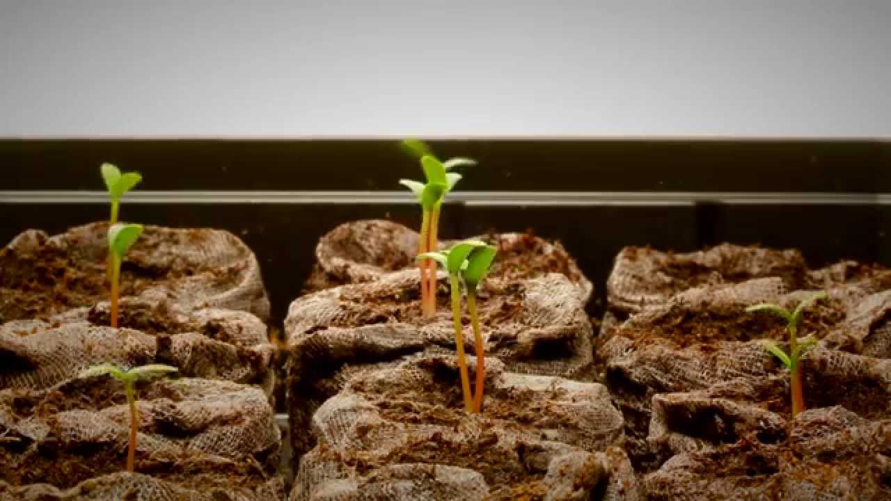 Best Grow Lights for Starting Seeds – MOTHER EARTH NEWS