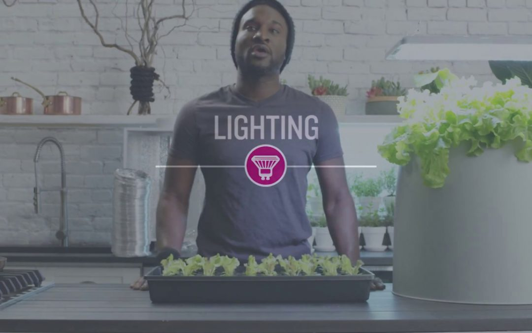 Types of Grow Lights for Hydroponics | Root Farm Canada