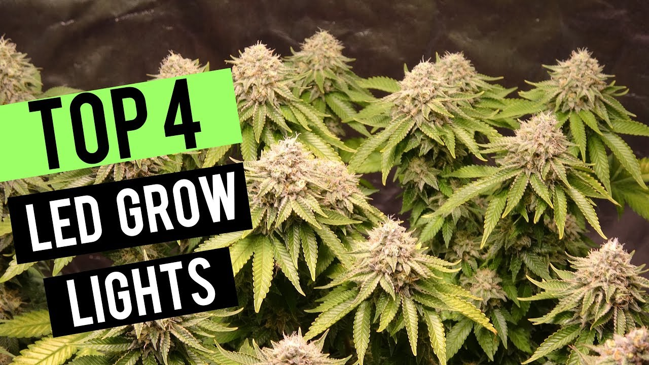 TOP 4 LED GROW LIGHTS 2019! – 2X2 COVERAGE AREA
