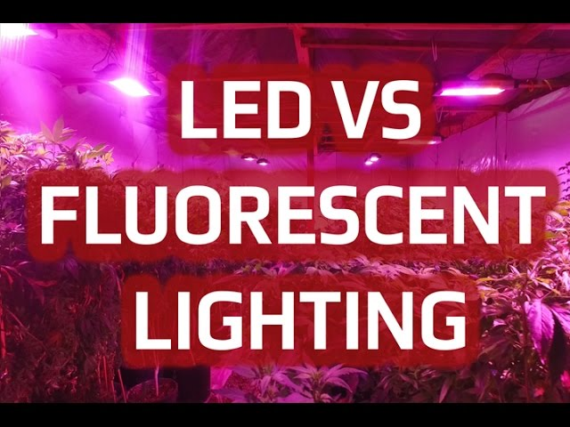 Compare Differences Between Fluorescent vs. LED Grow Lights | California LightWorks