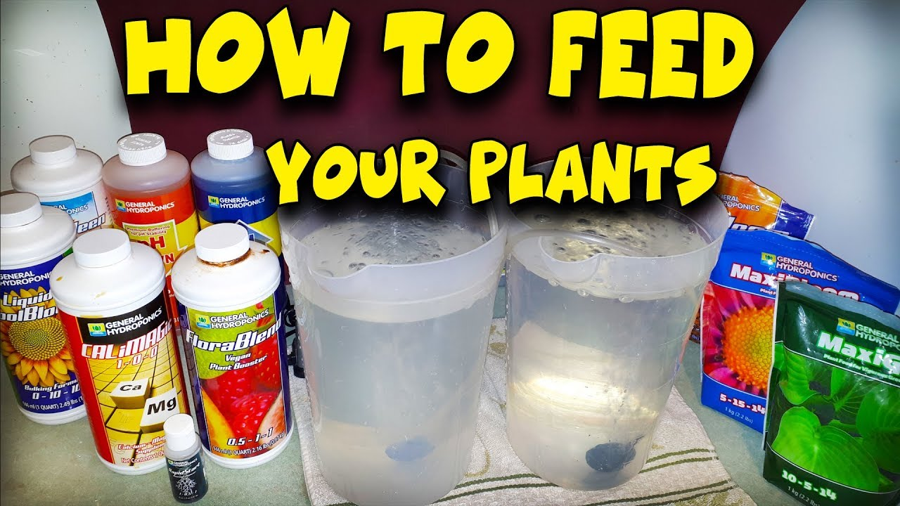 How To Feed Your Plants – Water, Nutrients & PH