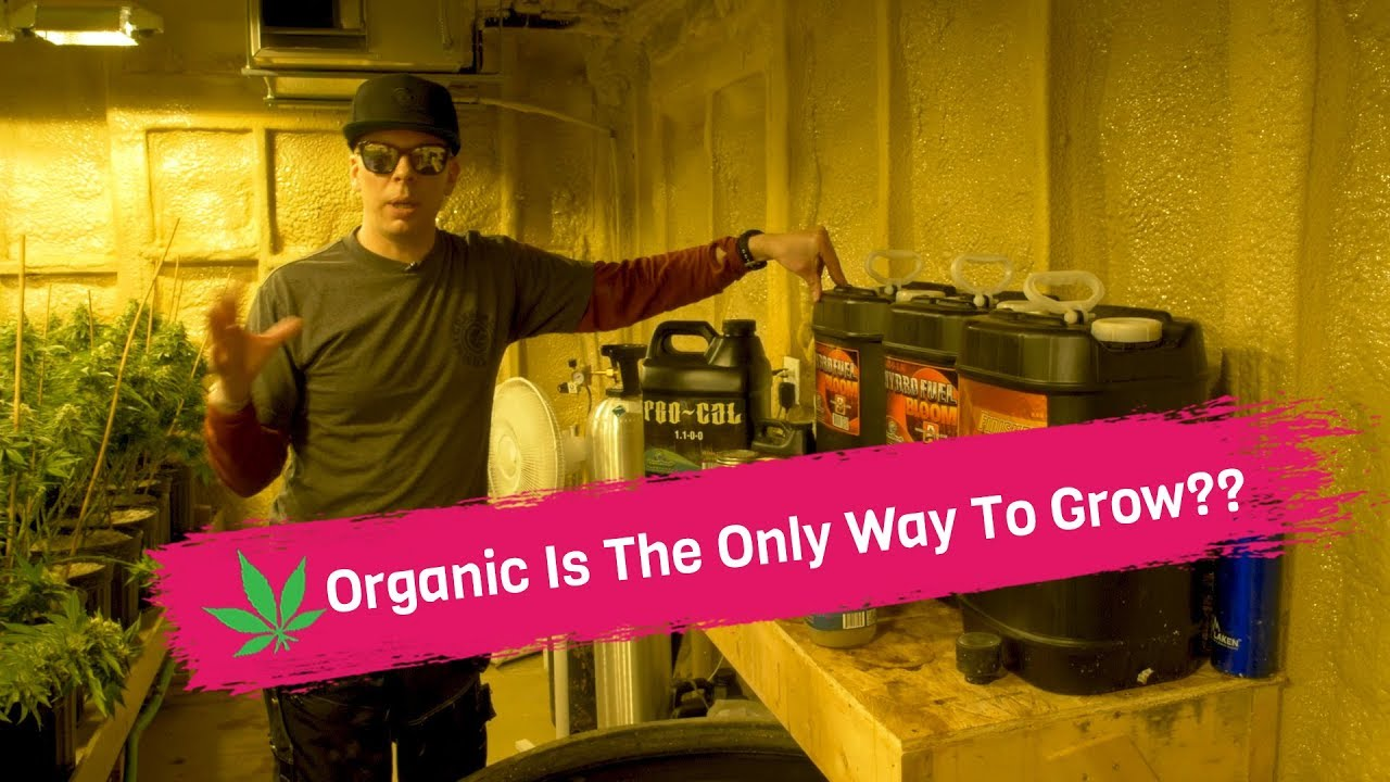 Organic Is The Only Way To Grow? – Synthetic Vs Organic