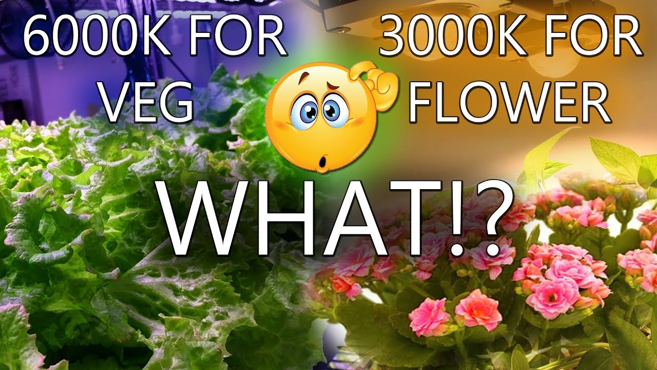 The Truth About Grow Lights | Lets Clear the Confusion