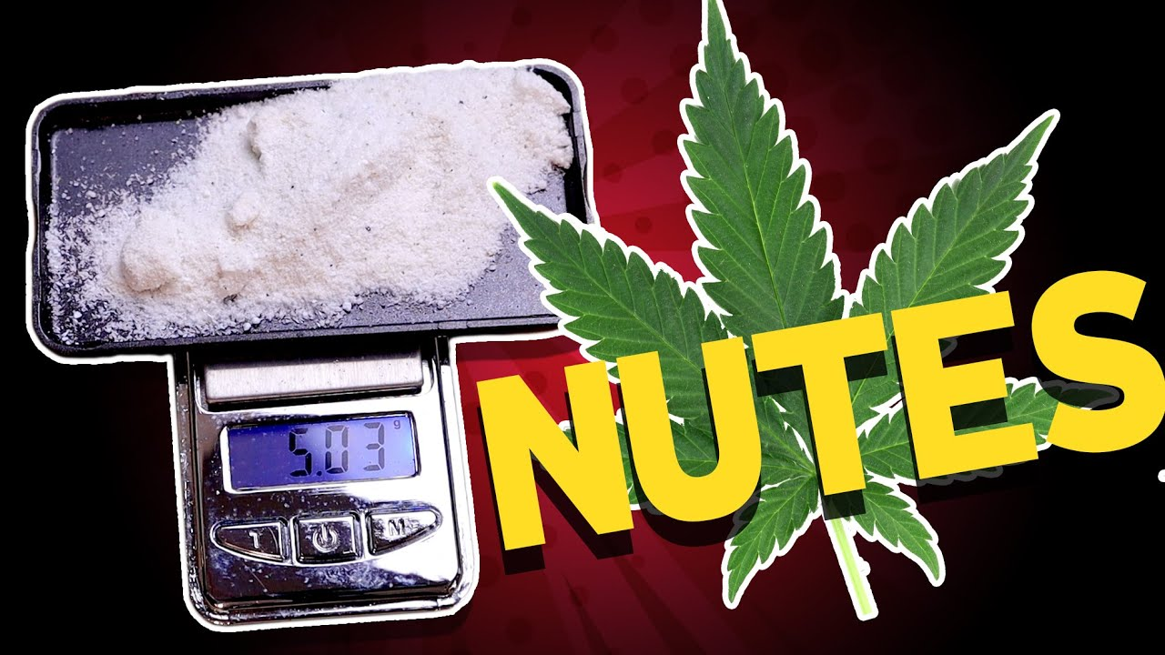 The Lazy Bum's Guide to giving Cannabis Nutrients for healthy plants and a thickkk harvest.