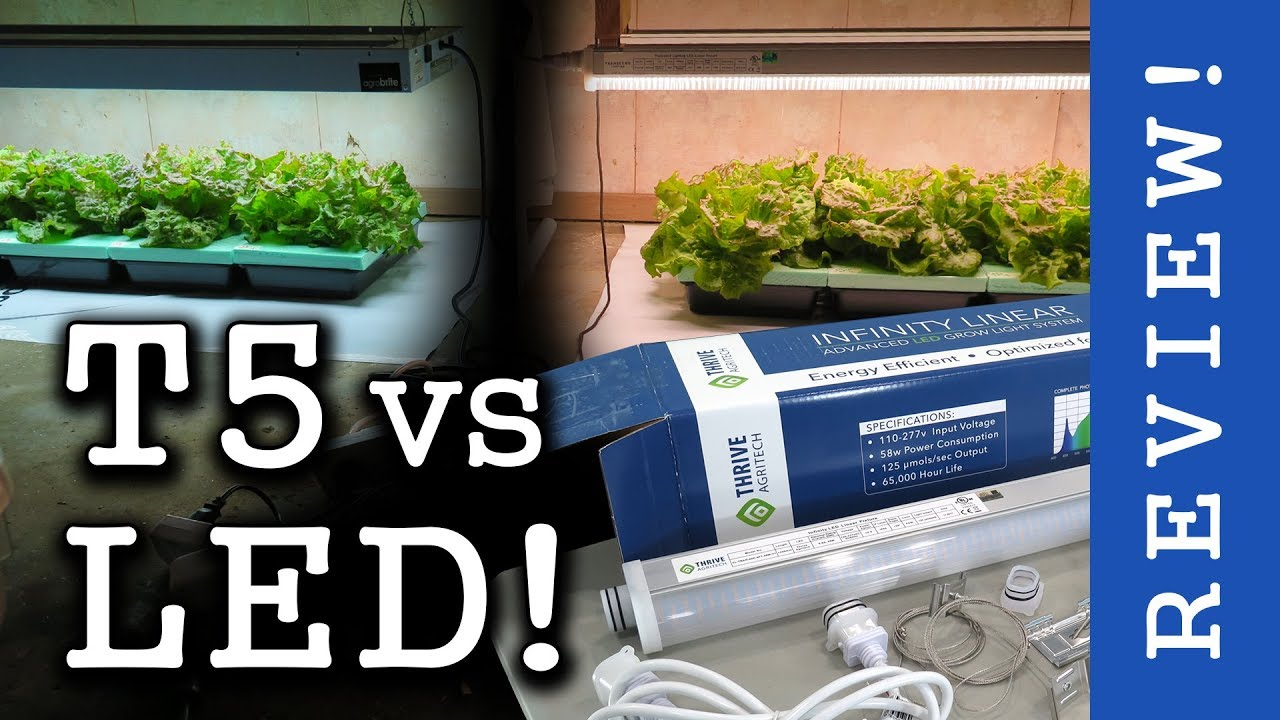 High End LEDs vs T5 Fluorescent! Thrive Agritech: Infinity Linear (Review & Lettuce Test)