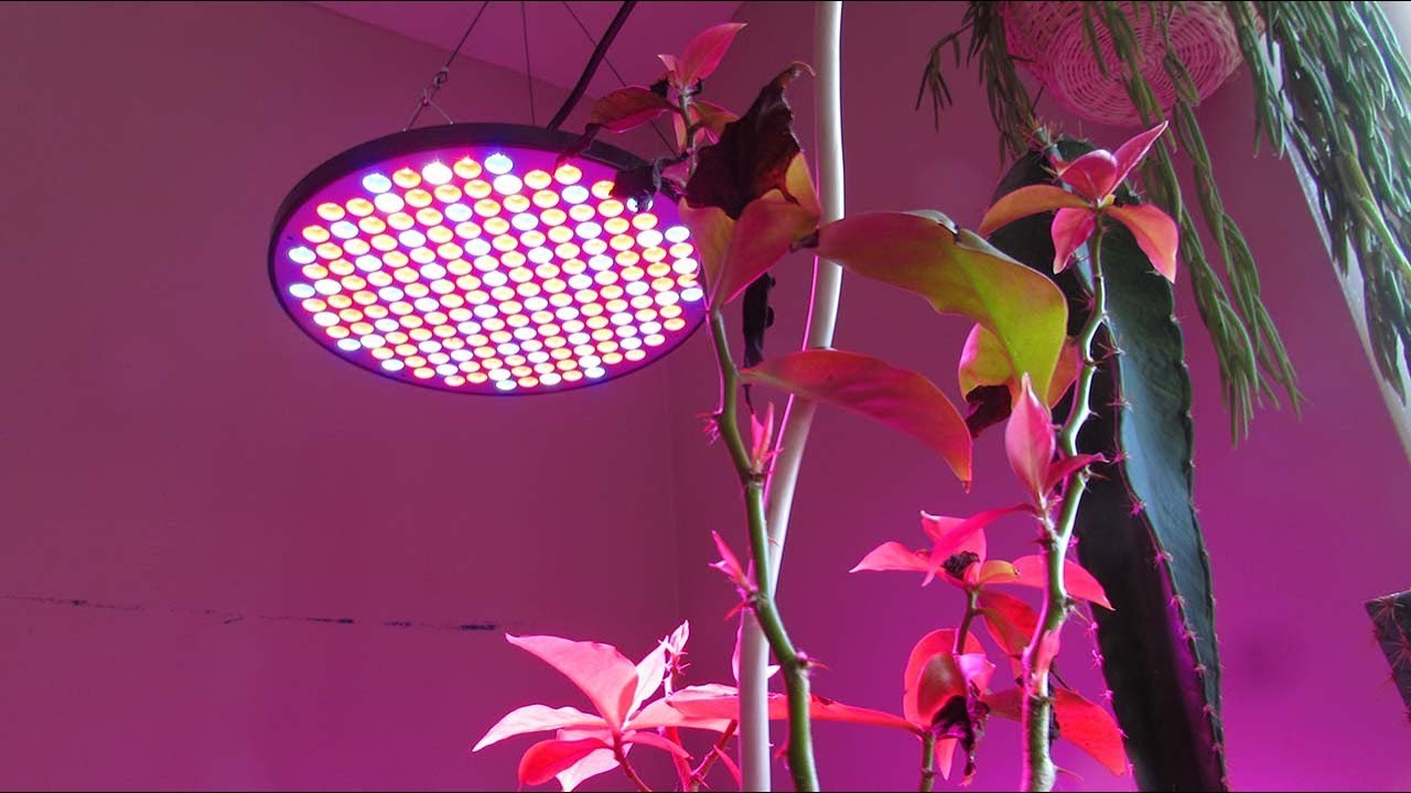 50w LED UFO Grow lights by Mrhua on AMAZON – Review & Update