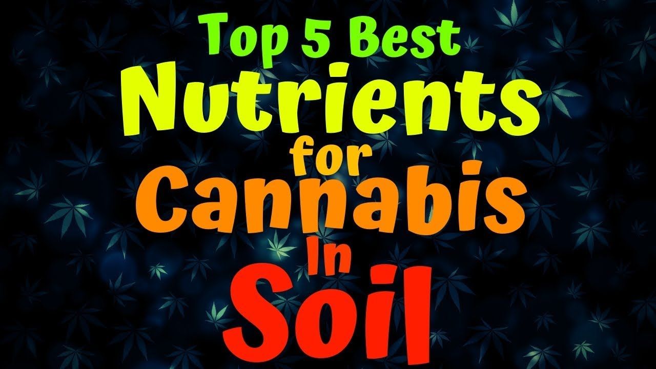 Best Nutrients For Cannabis In Soil