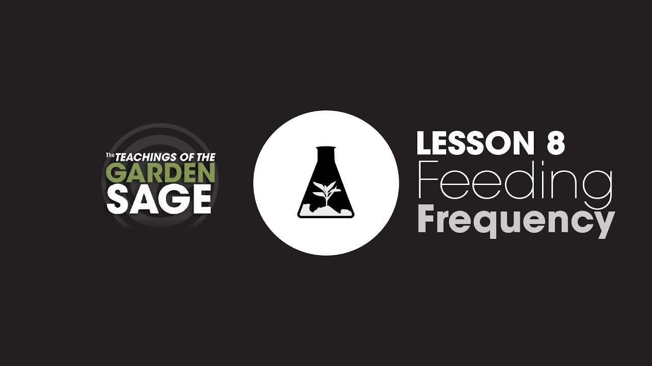 How Often Should You Feed Plants? – Lesson 8
