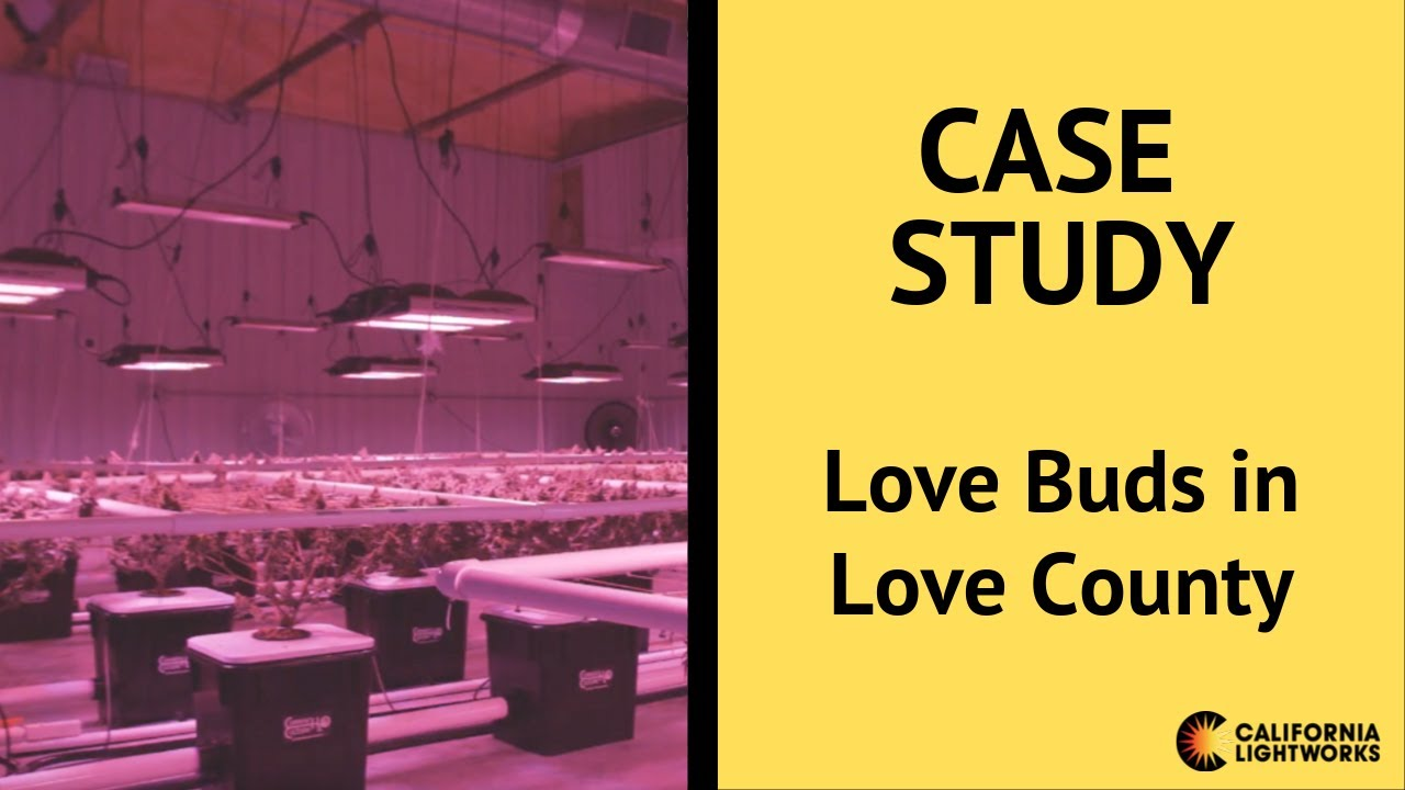 Love Buds in Love County Equipped with California Lightworks LED Grow Lights