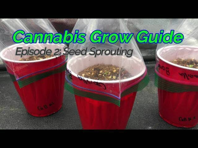 Cannabis Grow Guide Ep. 2 Medical Cannabis Seedlings Sprouts. Mixing Canna Nutrients for Seedlings.