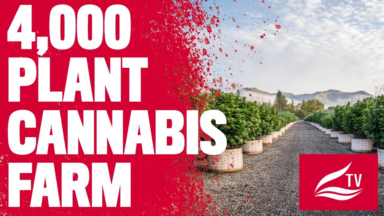 How to Grow 4,000 Cannabis Plants Outdoors with Greenbull farms