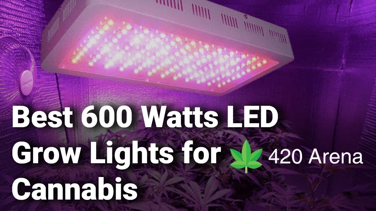 Best 600w LED Grow Lights for Cannabis: Complete List with Features & Details – 2019