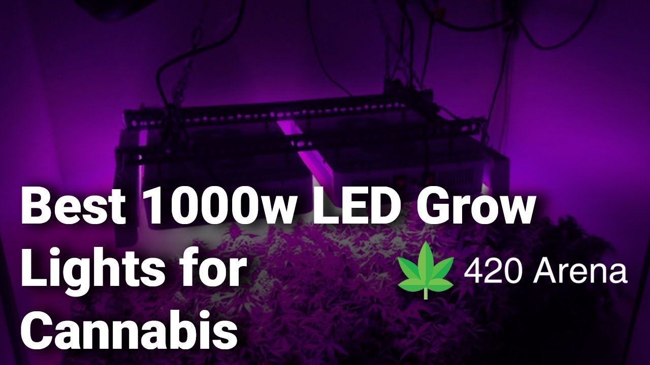 Best 1000w LED Grow Lights for Cannabis: Complete List with Features & Details – 2019