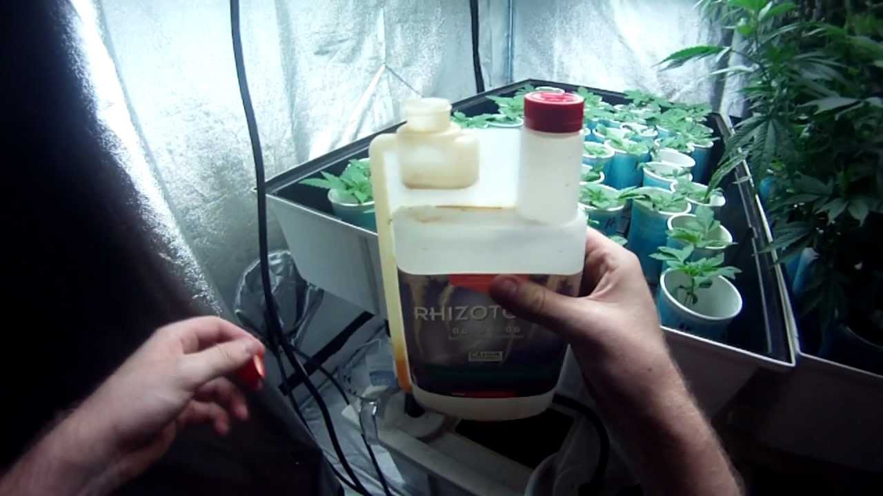 VaderVision E:10 – Nutrients for Young Cannabis Seeds