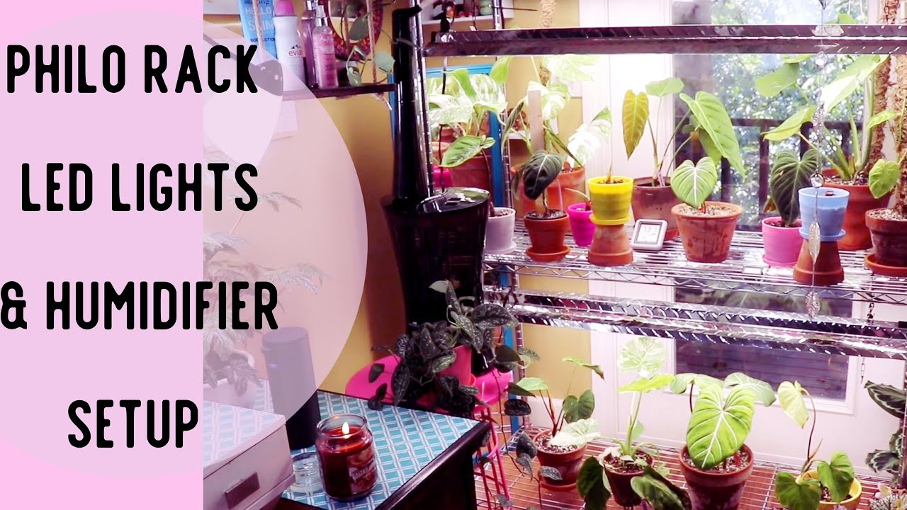 Philodendron indoor plant rack, LED Grow Lights & Plant Humidifier Setup
