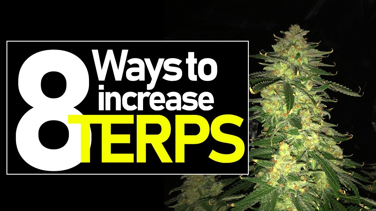 HOW TO GROW THE BEST SMELLING AND TASTING CANNABIS W/ TERPENES