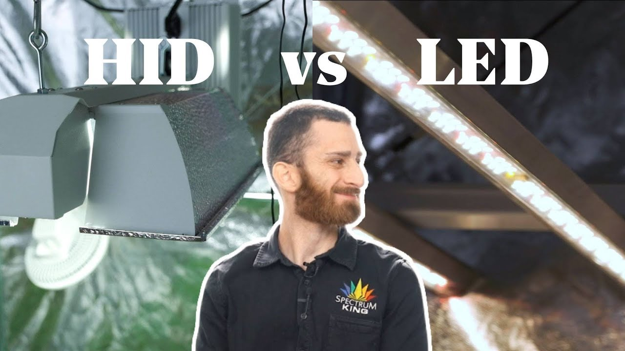 HID vs LED Grow Lights Comparison – Which Is Best For Growing Weed?