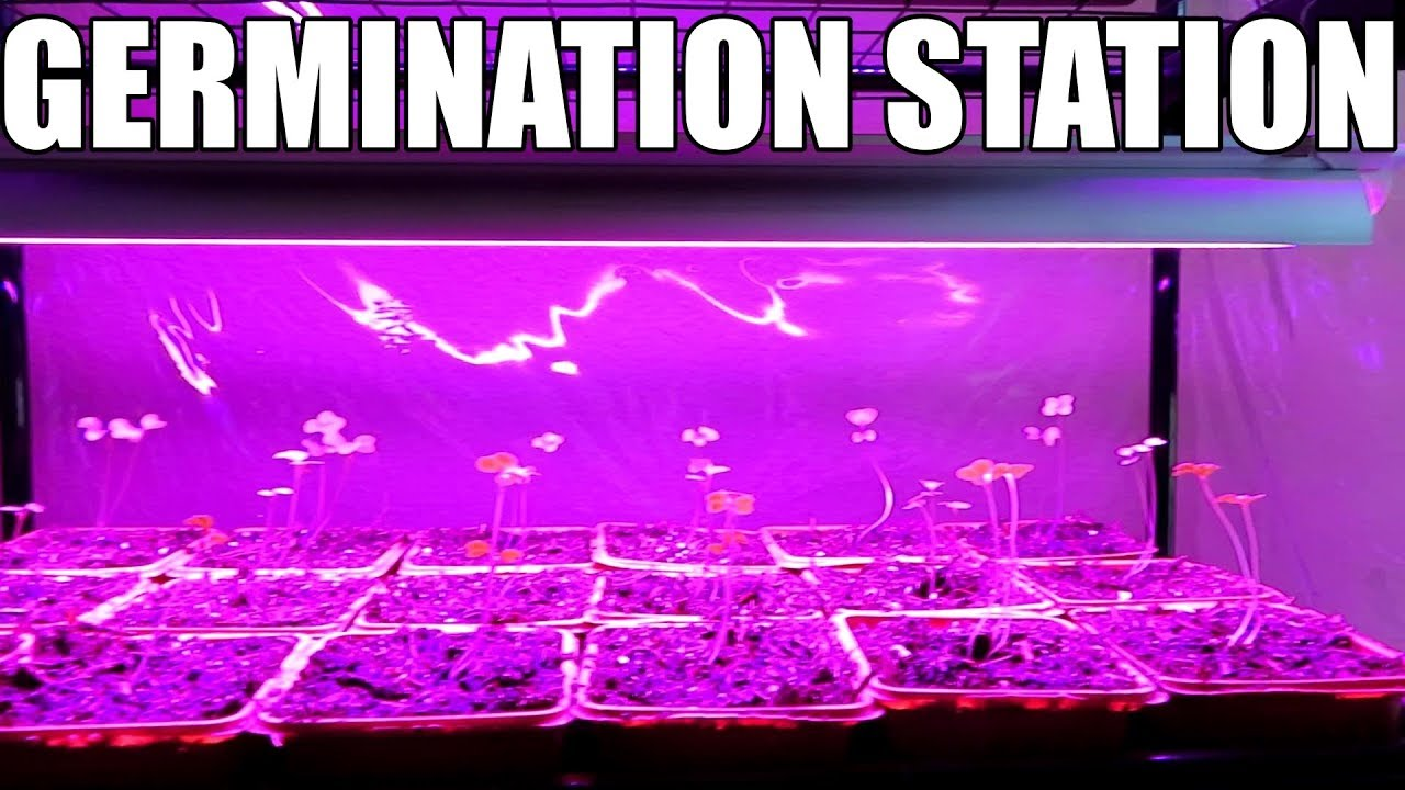 Inexpensive germination station with LED grow lights