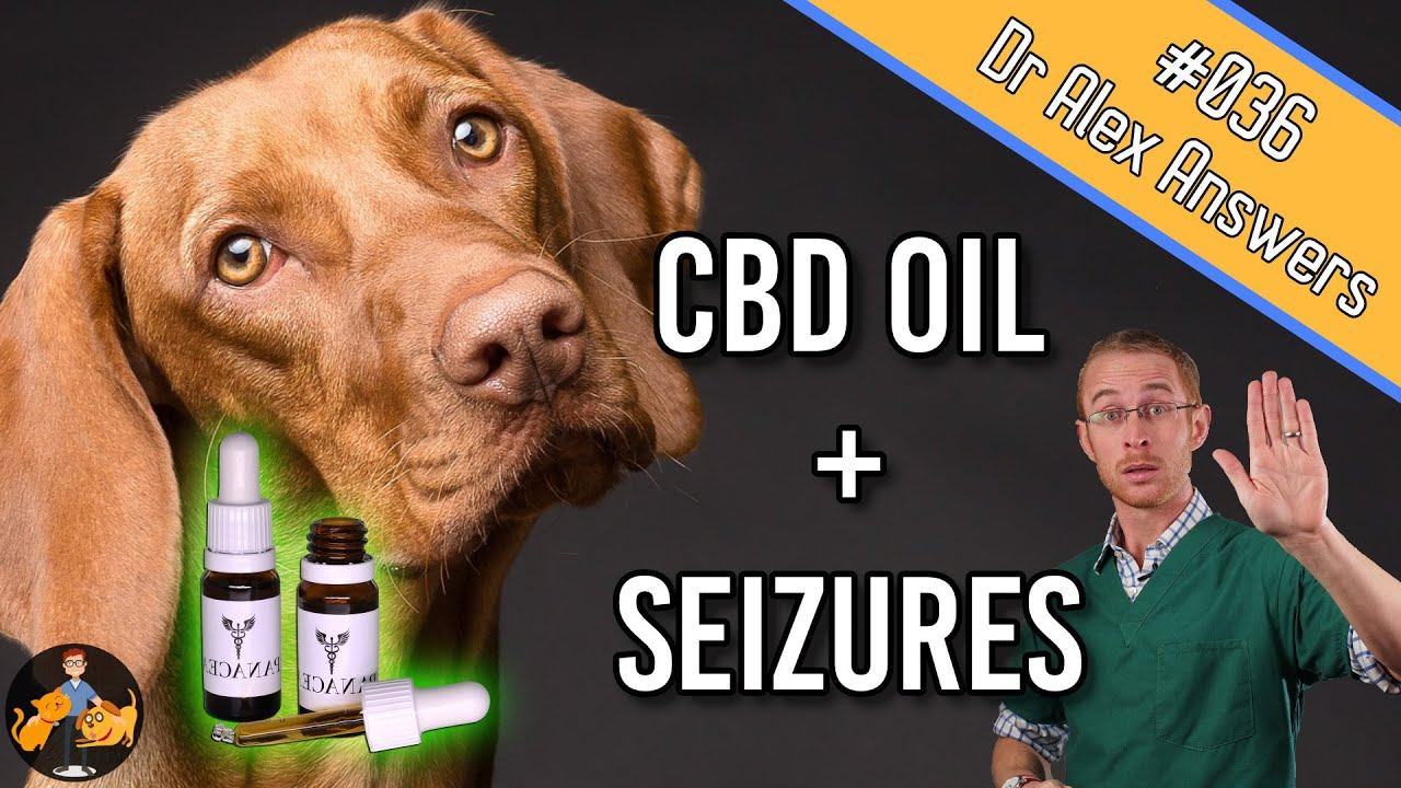 CBD Oil and Seizures in Dogs (the best treatment?) – Dog Health Vet Advice