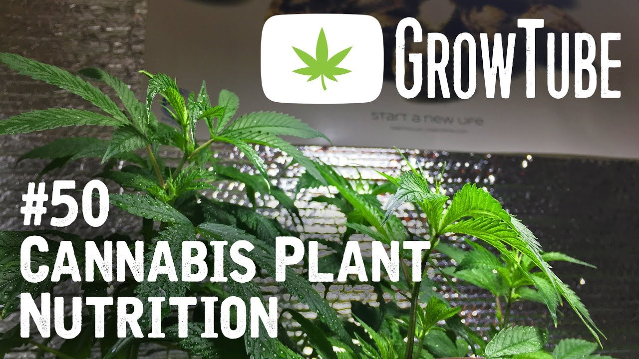GrowTube #50 – Cannabis Plant Nutrition with Blue Planet Nutrients