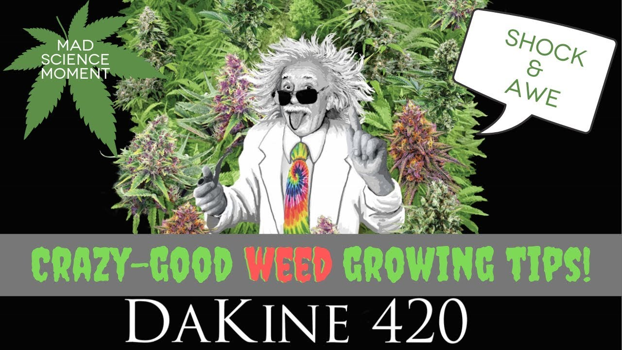 Dakine 420 Mad Science Moment: Shock & Awe cannabis nutrients