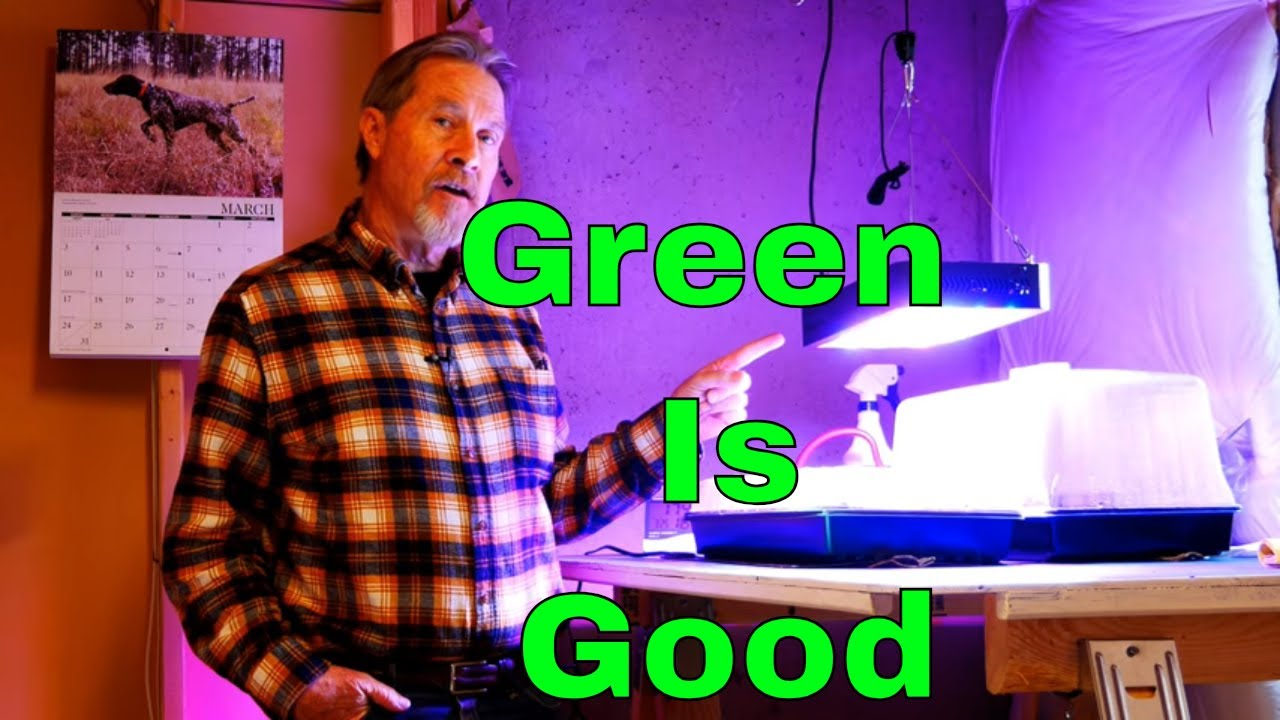 Grow Lights and Why Plants Are Green