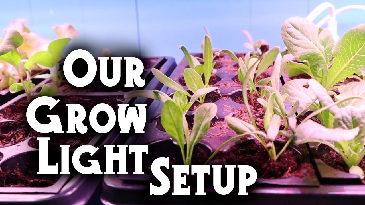 Get a Jumpstart on Spring! Starting Seeds Indoors with Grow Lights