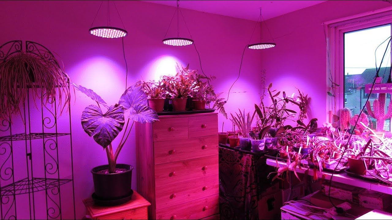 Overwintering VLOG 8 – Installing Plant Grow Lights in my Grow Room & Office