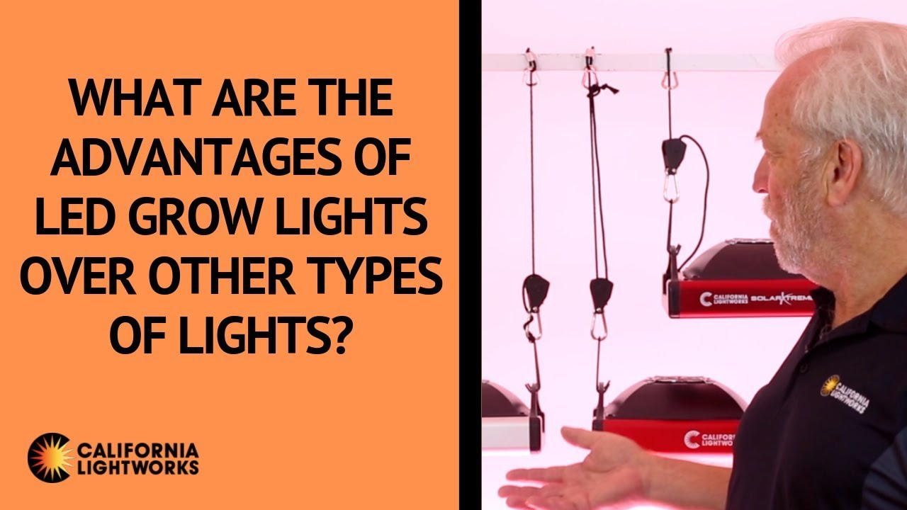 What are the advantages of LED grow lights over other types of lights? – FAQ