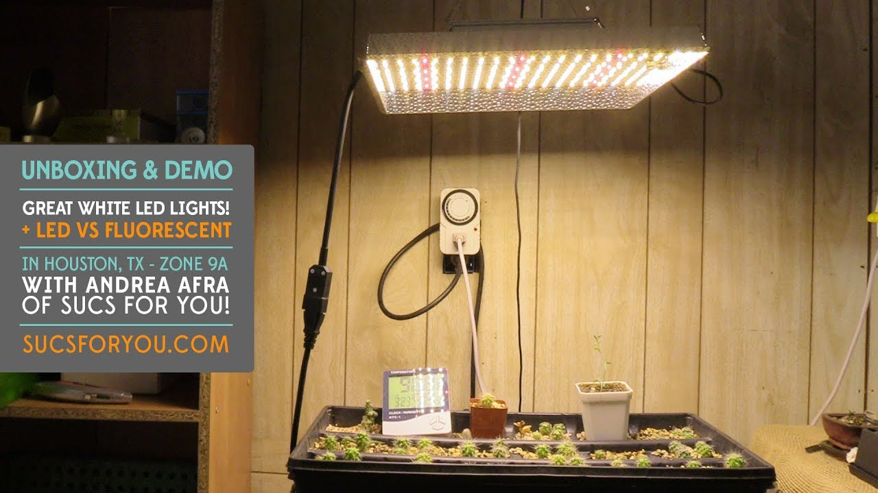 LED Grow Lights for Succulents – Unboxing and Demo