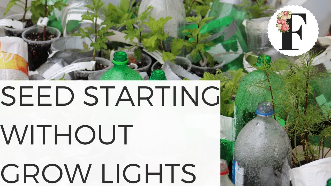 SEED STARTING WITHOUT GROW LIGHTS! EASY OUTDOOR SEED STARTING!