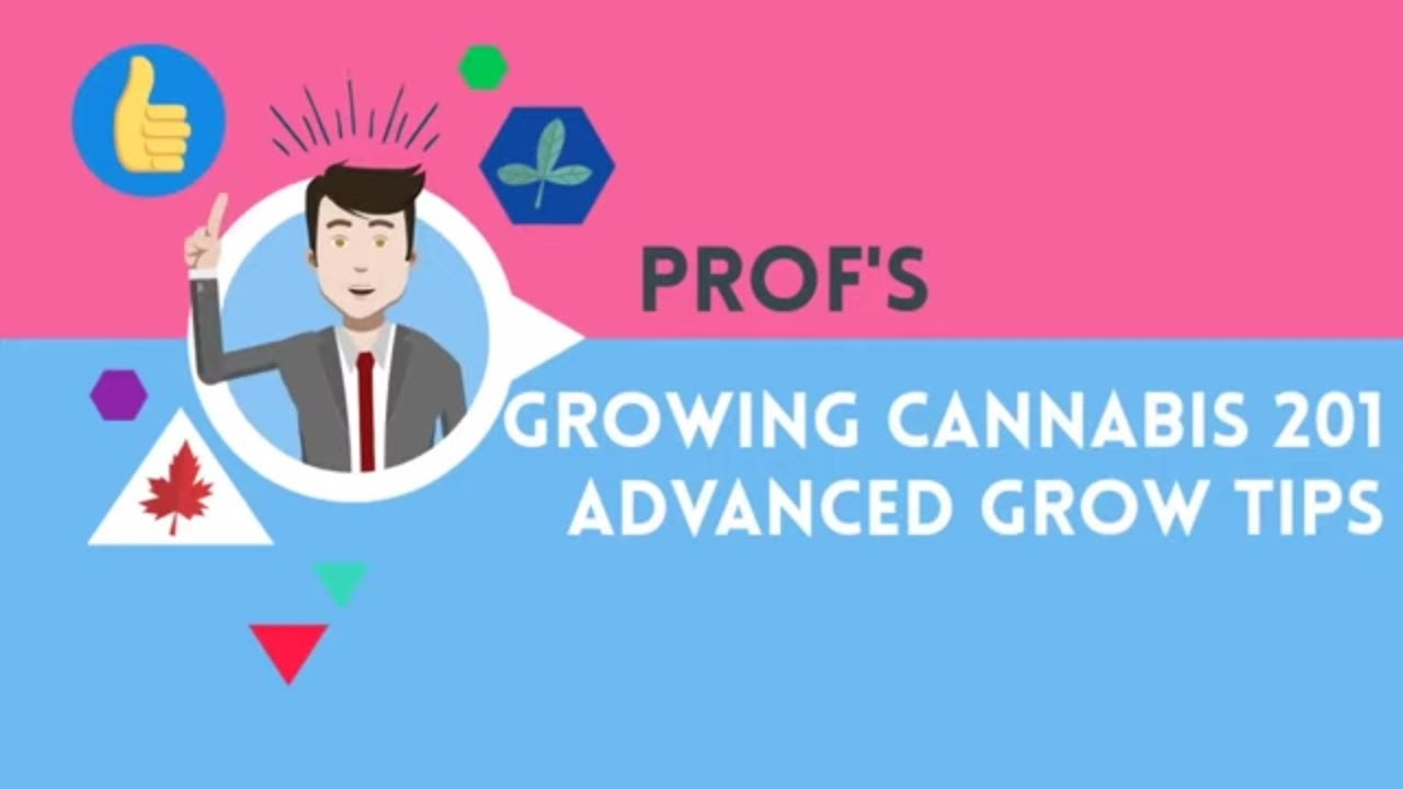 Growing Cannabis 201 – Advanced Grow Tips – Complete Course