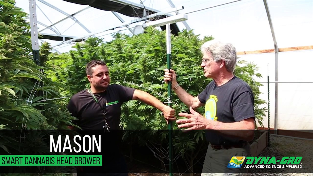 Dyna-Gro Plant Nutrients and Smart Cannabis Greenhouses
