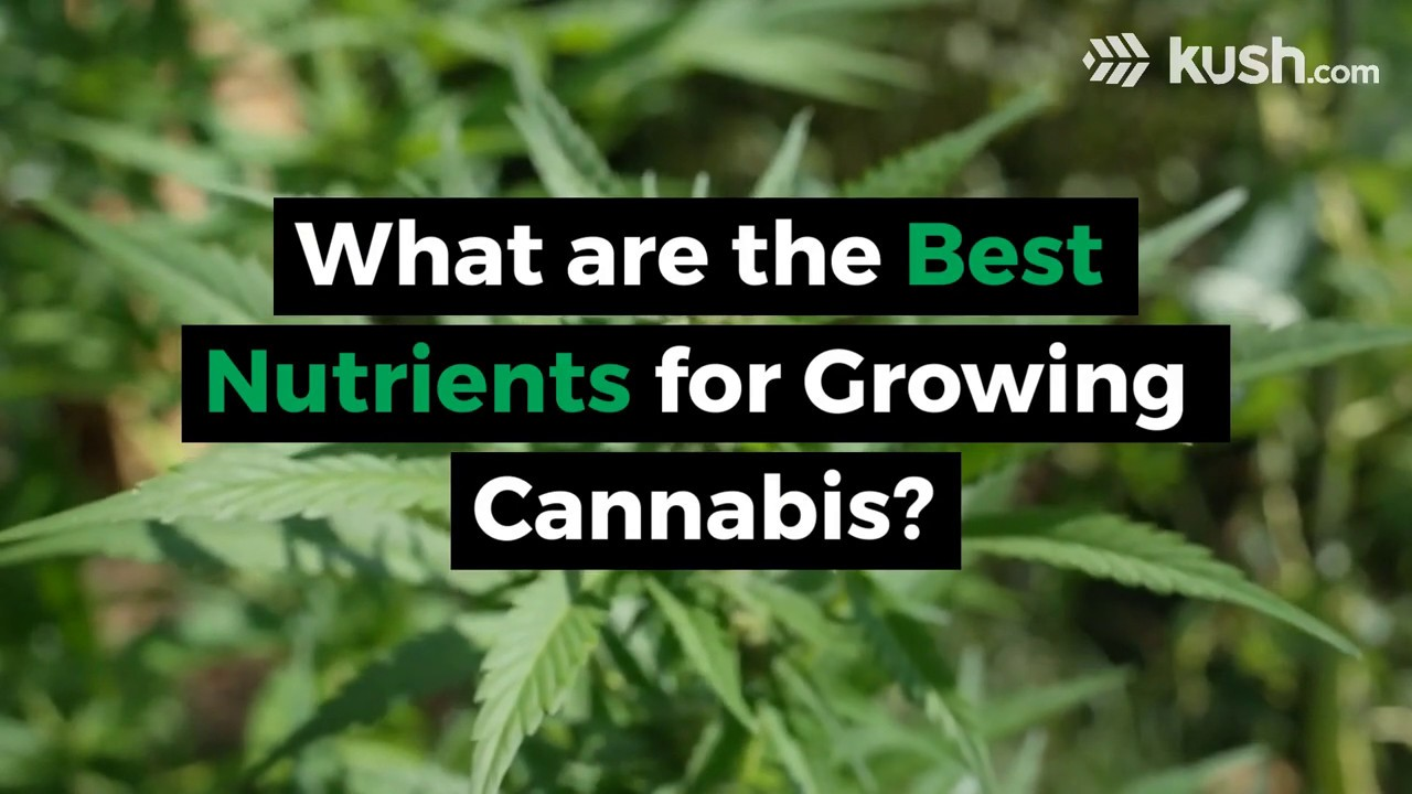 What are the Best Nutrients for Growing Cannabis?   Kush.com