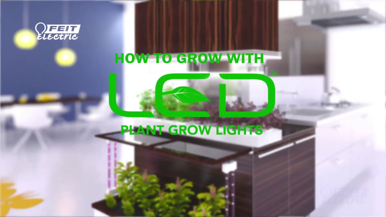 How to Grow Like a Pro with Feit Electric LED Grow Lights