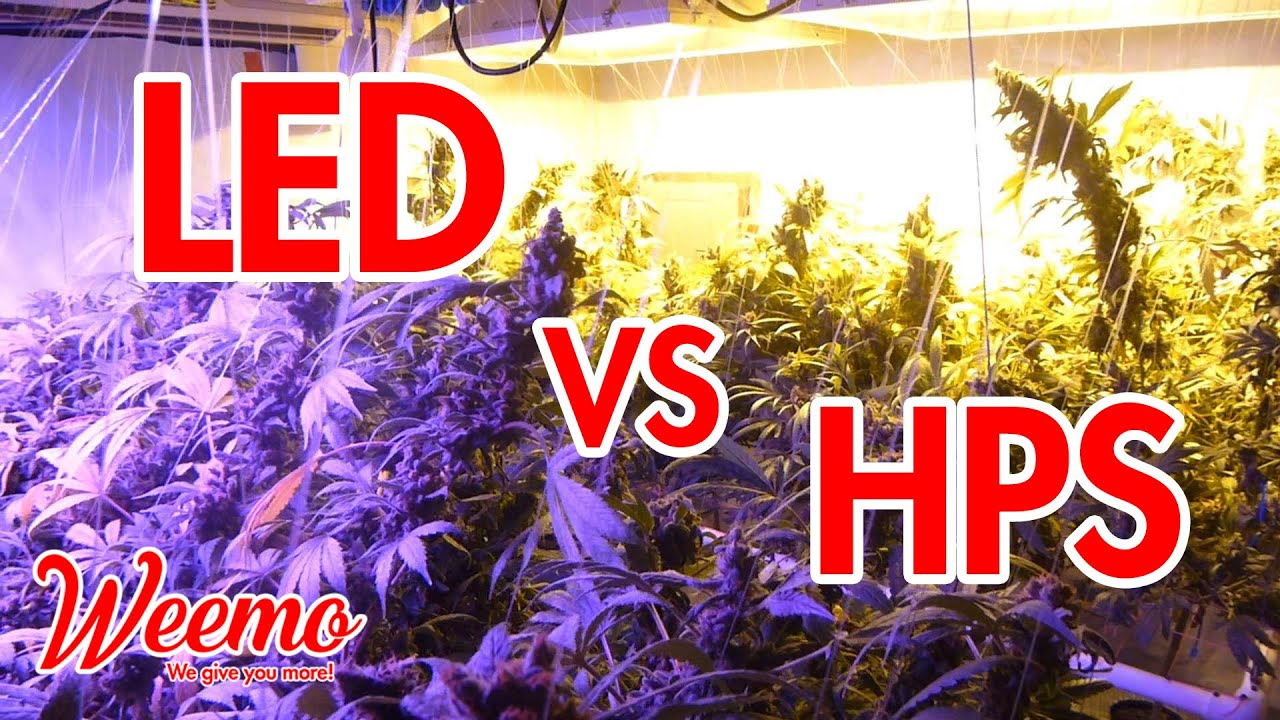 LED Vs HPS – Which Grow Lights Are Better?