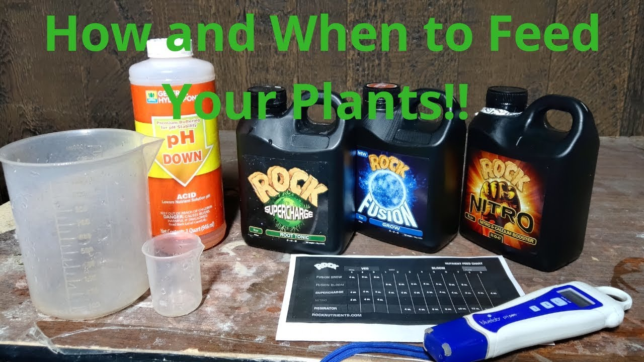 Cannabis Tips n' Tricks #3 – How and When to Feed Your Plants!