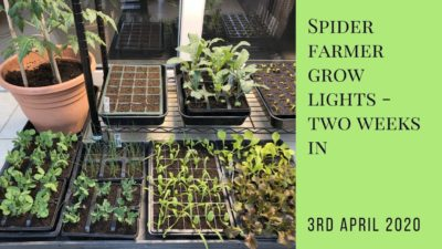 Spider Farmer grow lights – two weeks in