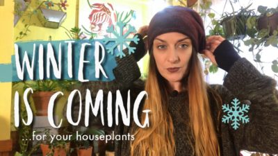 How To Prepare Houseplants For Winter – Cleaning, Grow Lights, Humidity (+bloopers!)