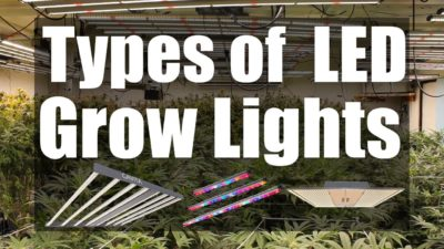 Different Types of LED Grow Lights – Bulbs, Bars, and Panels – Which is the Best for Your Grow Tent
