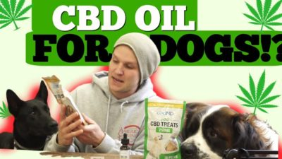 Is CBD oil safe for DOGS?-  Should you use CBD oil for your dog?