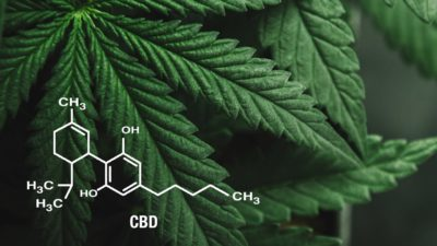 How to make CBD oil based products
