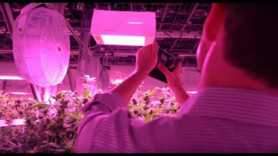 LED Grow Lights: Accelerated Harvest with Heliospectra's Spectral Control