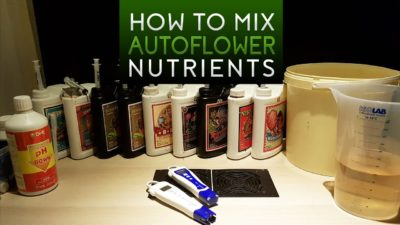 How to mix advanced nutrients for autoflowers? – Cannabis grow in coco coir & perlite!