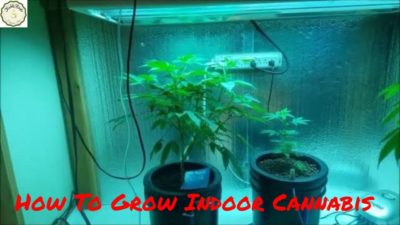 Best Coco Coir Hydroponics Nutrients for Weed – How To Grow Indoor Cannabis mediums Coco Hydro Soil