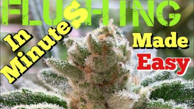 HOW TO FLUSH YOUR WEED IN MINUTES !!!MADE EASY